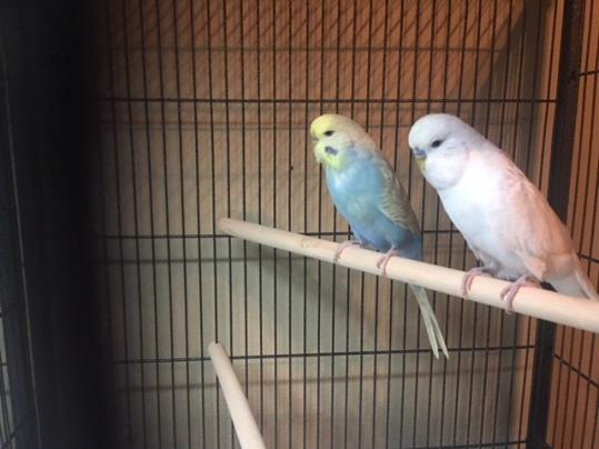 Casper & Goldie